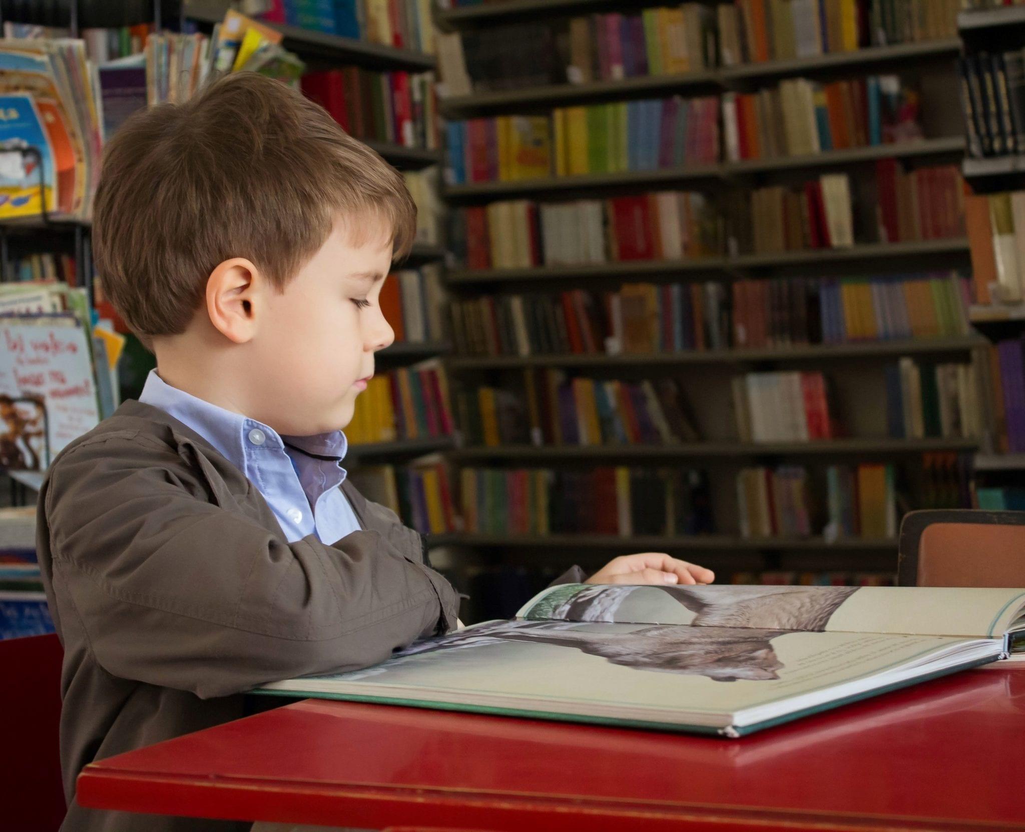 Boy reads K-12 materials